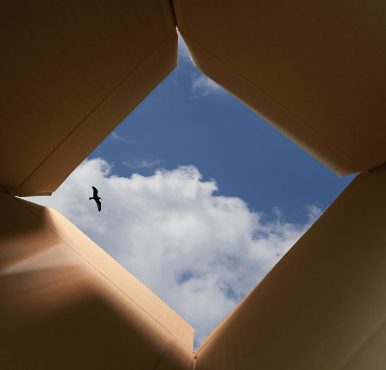 looking up to the sky out of the bottom of a cardboard box